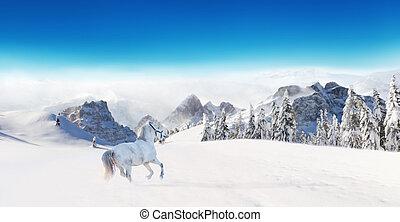 White horse running in winter landscape - White horse...