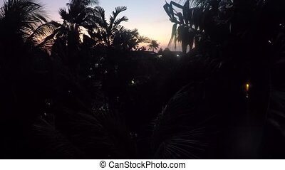 Exotic Bali view during sunset in tropical forest - Palms...