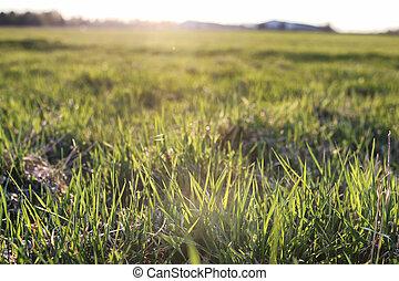 summer field wild pasture
