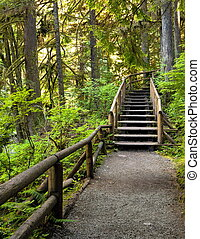 Wooden staircase on a hiking trail - Wooden staircase on a...