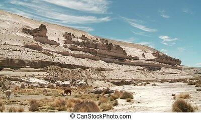 Rock (Andes, Peru)