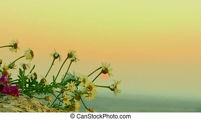 Wild flowers - Flowers lie on the edge of the cliff.