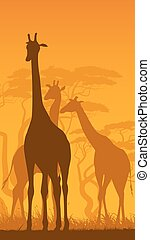 Vertical illustration of wild giraffes in African savanna. -...