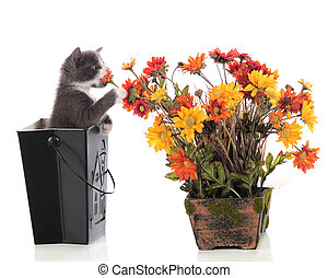 Kitty Sniffing Posies - An adorable kitten in a black...