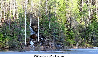 Waterfall in the coniferous forest