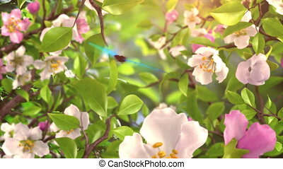 Intro with Butterflies and Blossoming Flowers, beautiful 3d...