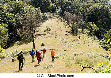 Image group of Mountaineer Walking on deep forest