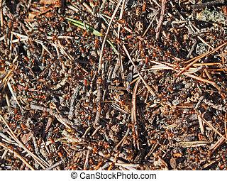 mrowisko, mrówki