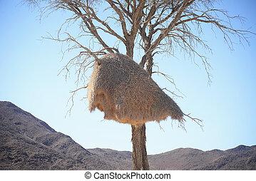 weaver bird nest - weaver big bird nest
