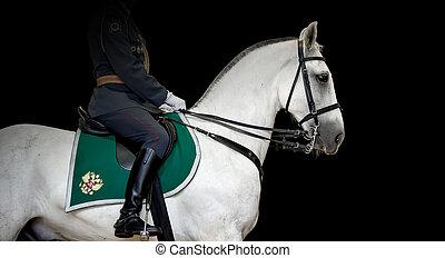 Rider on white Orlov Trotter horse, black background