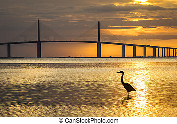 Great Blue Heron silhouetted at sunrise - St. Petersburg,...