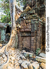 banyan tree in ruin Ta Prohm, Cambodia. - banyan tree roots...