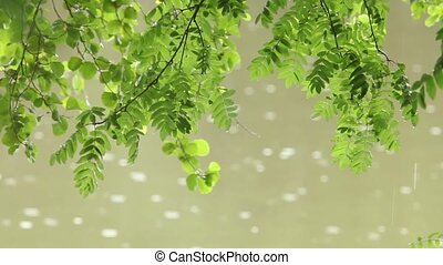 wet green leaf on a background of falling raindrops - Warm...
