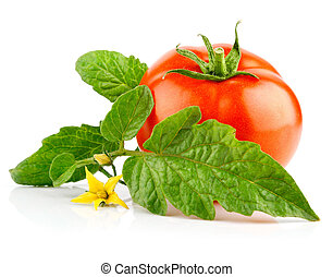 isolated red tomato vegetable with green leaf