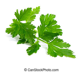 Fresh branch of green parsley natural food isolated