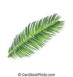 Full fresh leaf of sago palm tree, vector illustration...