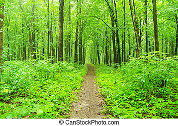 forest - Sunny summer day in green forest