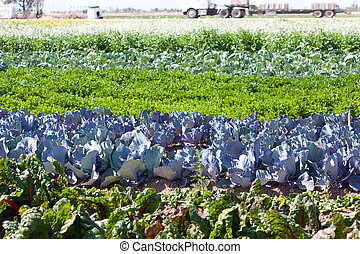 colorful rows of vegetables in the field