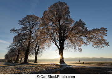Tree avenue in winter with backlight