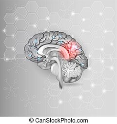 Human brain with red light abstract light grey hexagon...