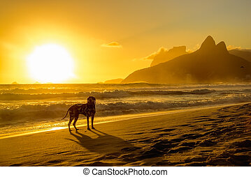 Dalmatian dog standing at the edge of Atlantic Ocean on the background of the beautiful golden sunset at Ipanema beach