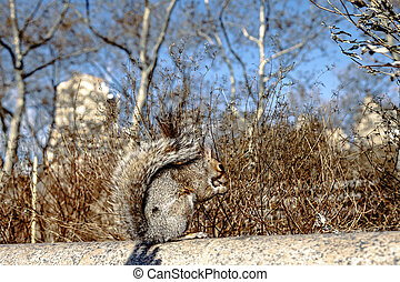 Cute Squirrel in Battery Park - An adorable squirrel posing...