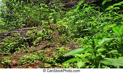 Mountain River Waterfall among Rocks through Plants - camera...