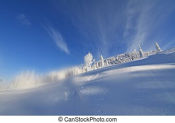 Snow covered trees after a snowstorm in the winter mountains