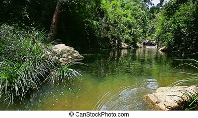 Calm River by Tropical Plants Transparent Water under Sunlight