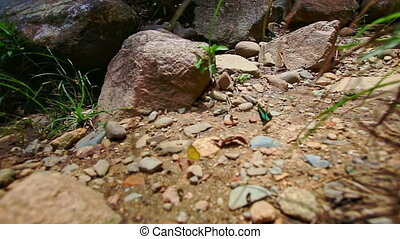 Closeup Yellow Green Butterflies Sit on Fly over Rocky...