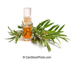 Melaleuca essential oil in the pharmaceutical bottle with...