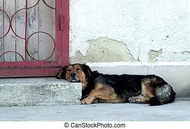 Dog relaxing on doorstep in the sun - Dog resting head on...