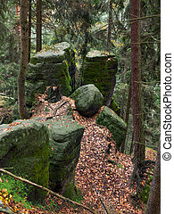 Mossy rocks in the forest