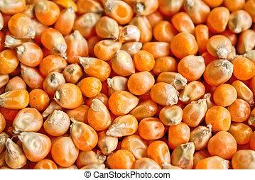 Popcorn Kernels Background - Closeup of popcorn kernels for...