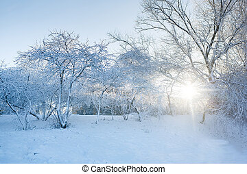 The snowy trees in a garden at winter time