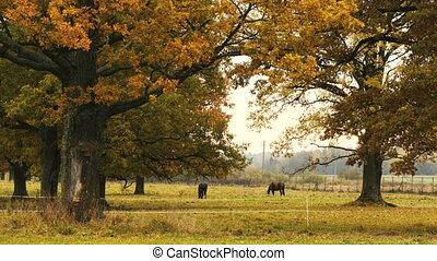 Horses taking rest under the tree - Two horses taking rest...