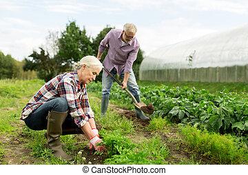 senior couple working in garden or at summer farm - farming,...