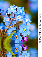 Blue delicate flowers and water reflection