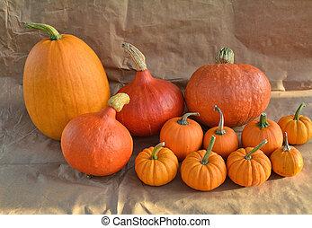 Orange pumpkins group - Group of orange pumpkins on paper...