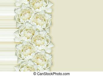 blanco, flores, Peonía, arreglo