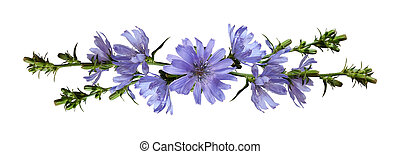 Chicory flowers in a line arrangement