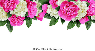 Pink and white peonies flowers header isolated on white
