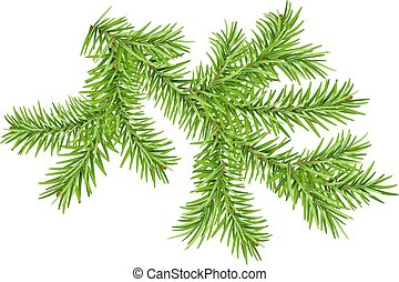 Green pine branch isolated on white. Vector illustration