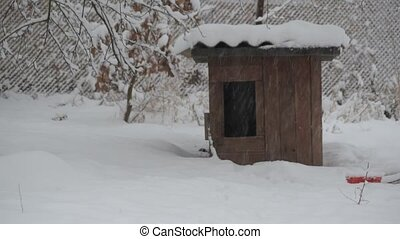 Dog runs to and then from kennel in winter - Mongrel dog...