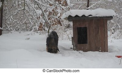 Dog on chain eating in snow near kennel