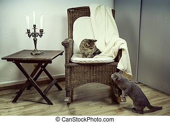 Two cats are introduced in the room