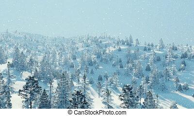 Winter fir forest at snowfall aerial view 4K
