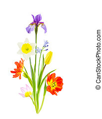 Arrangement of spring flowers on white