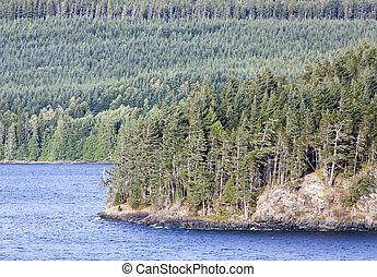British Columbia Coastline - The coastline dense with trees...
