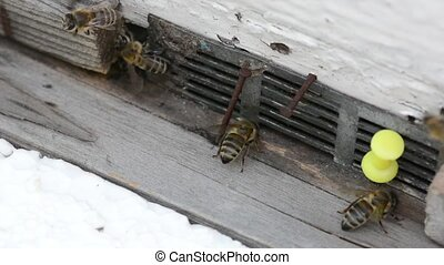 Close-up view of many working bees. Summer time. Private...
